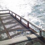 2012年度しめも尼崎魚つり公園