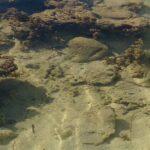 2013石垣島 サザンゲートブリッジを下見